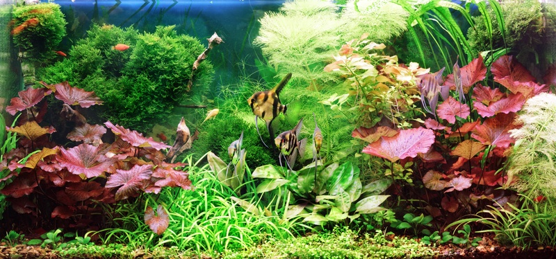 Custom Aquariums Huntington Aquarium Maintenance Saltwater Fish Fish Tank Service Reef