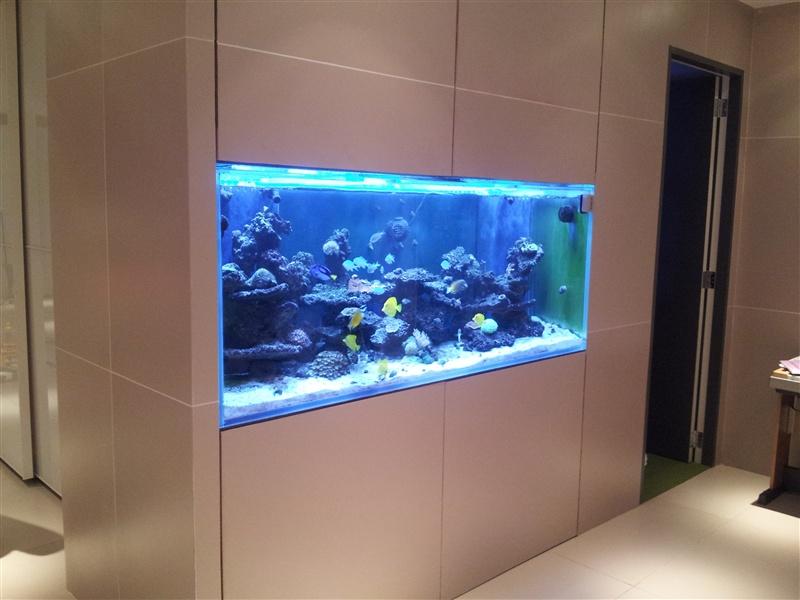 Custom Aquariums Huntington | Aquarium Maintenance | Saltwater Fish | Fish Tank Service | Reef 10 Gallon Fish Tank Ideas