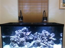 90 Gallon Reef Set Up With Kessil Lighting