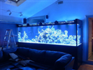 1,000 Gallon Custom Glass Reef Aquarium