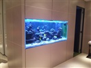 In Wall Custom Reef Tank