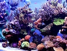 Salt Water Reef Aquarium